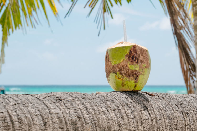 Sea Water Focus On Foreground Nature Close-up Coconut Day Sky No People Horizon Over Water Wood - Material Palm Tree Tropical Climate Horizon Fruit Tree Outdoors Beach Plant Coconut Palm Tree Cocktail Drinking Straw Copy Space Rum Vacations