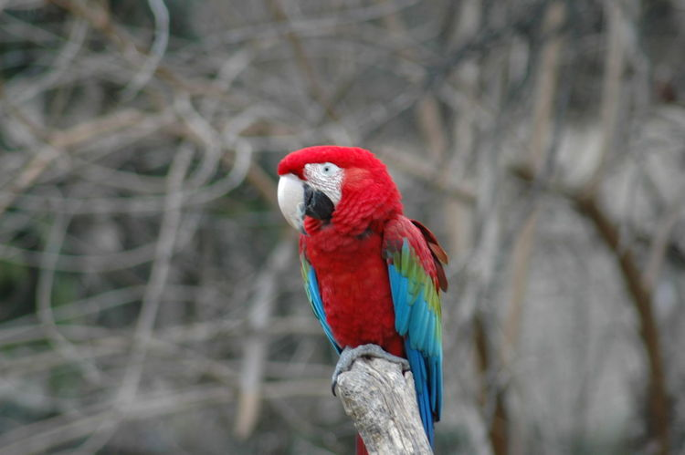 Animal Themes Animal Wildlife Animals In The Wild Ara Macao Beauty In Nature colour of life Macaw Nature One Animal Parrot