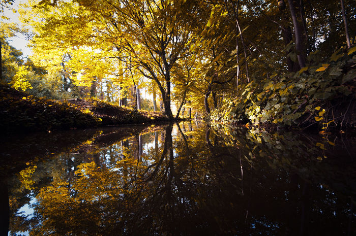 Autumn Lost Mirror Canopy Of Trees Deep Woods Leaves 🍁 Reflections Stream Woods Yellow