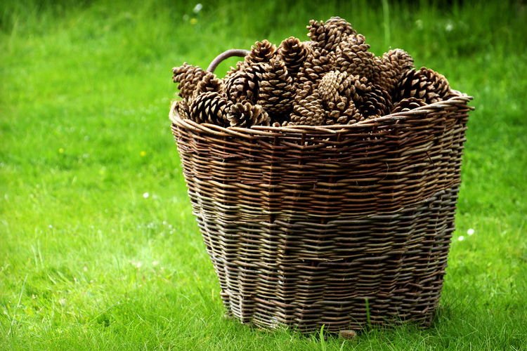 Basket Beauty In Nature Close-up Cone Day Field Freshness Grass Green Color Nature No People Outdoors Picnic Basket Pine Cone