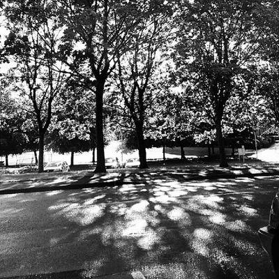 #trees #light #sun #love #instagood #tweegram #photooftheday #instagramtagsdotcom #instamood #me #summer #picoftheday #instagramhub #girl #instadaily #beautiful #bestoftheday #igdaily #instatags #webstagram #picstitch #nofilter #happy #sun #follow #instagramers