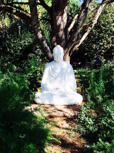 The Five Mindfulness Trainings - Plum Village 2016 EyeEmNewHere Buddha White Green Gratitude Buddhism Nature Flowers Fine Art Photography Beauty In Nature Love Atmosphere Happy Outdoors Tree Mindfulness Peace
