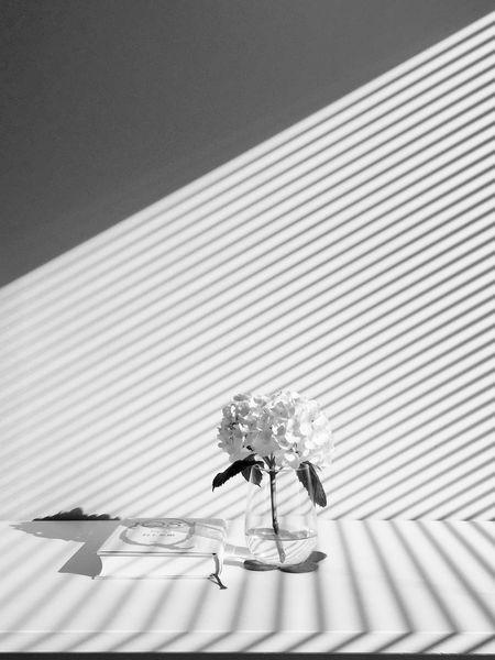Blackandwhite Light And Shadow Serendipity Capture The Moment From My Point Of View Haruki Murakami Hydrangea