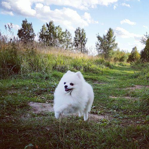 White dog on field against sky