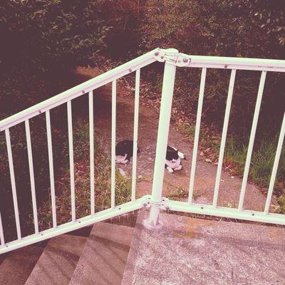 またね。にゃんたち。 猫 ねこ ねこ 野良猫 にゃんこ にゃん ハチワレ