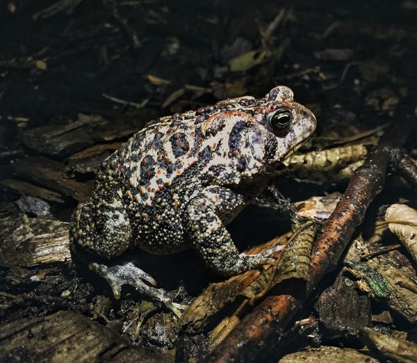 View of frog on twigs