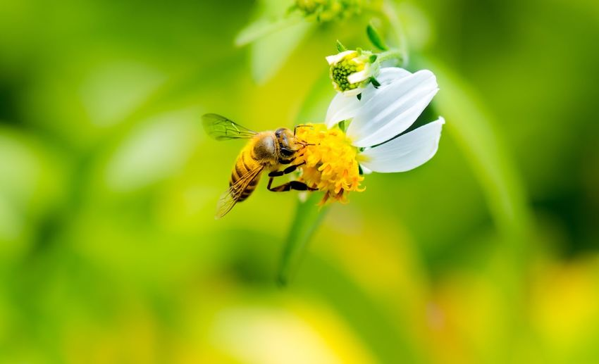 Insect Flower Animal Wildlife Invertebrate Flowering Plant Animals In The Wild Animal Beauty In Nature Animal Wing Focus On Foreground Animal Themes