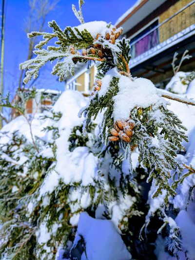 Winter Joy. Winter_collection Tree_collection  I Love Snow Cold Winter ❄⛄ Beautyful Colours Snow Winter Cold Temperature Nature Outdoors Tree No People Frozen Beauty In Nature Close-up