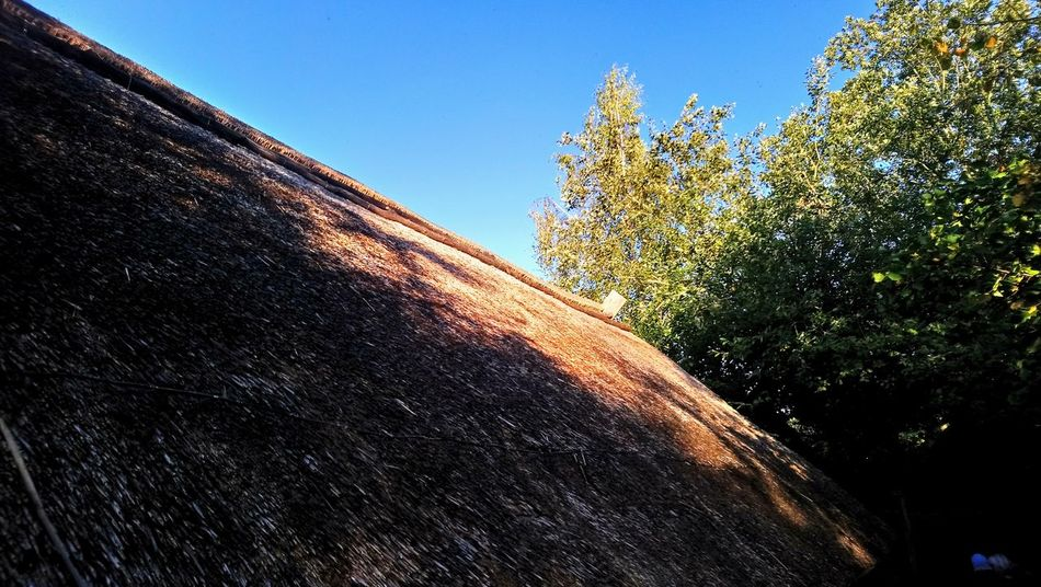Low Angle View Sky Outdoors Blue No People Day Nature Tree Reed Rooftop
