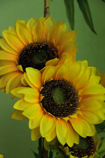 Artificial Artificial Flower Blooming Day Fake Flower Flower Head Growth Nature Sunflower Yellow