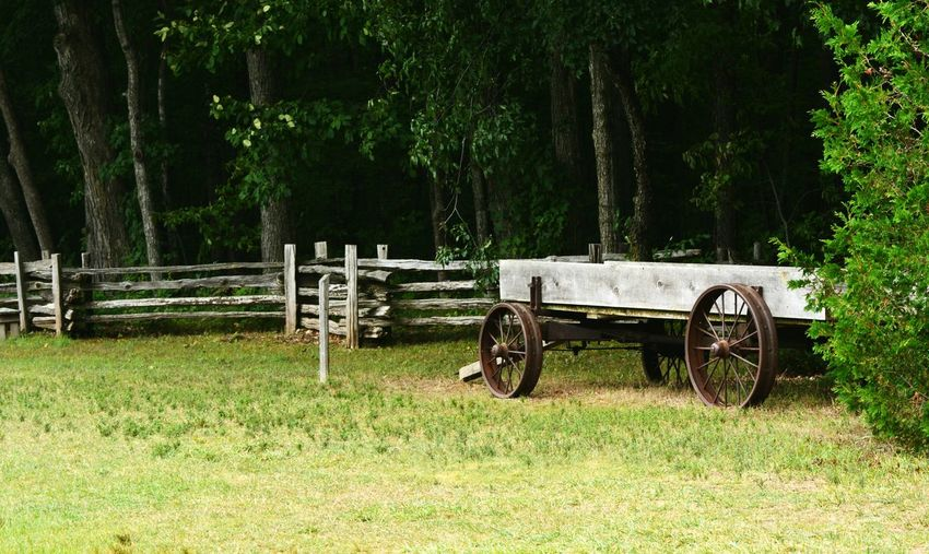 Antique Day Days Gone By Farm Wagon Fence Field Forest Grass Green Color Growth Landscape Nature No People Outdoors Rural America Rural Scene Simplicity Thick Forest Tranquility Tree Vintage Wagon  Woods