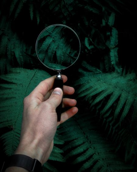 Cropped Hand Holding Magnifying Glass Over Plants