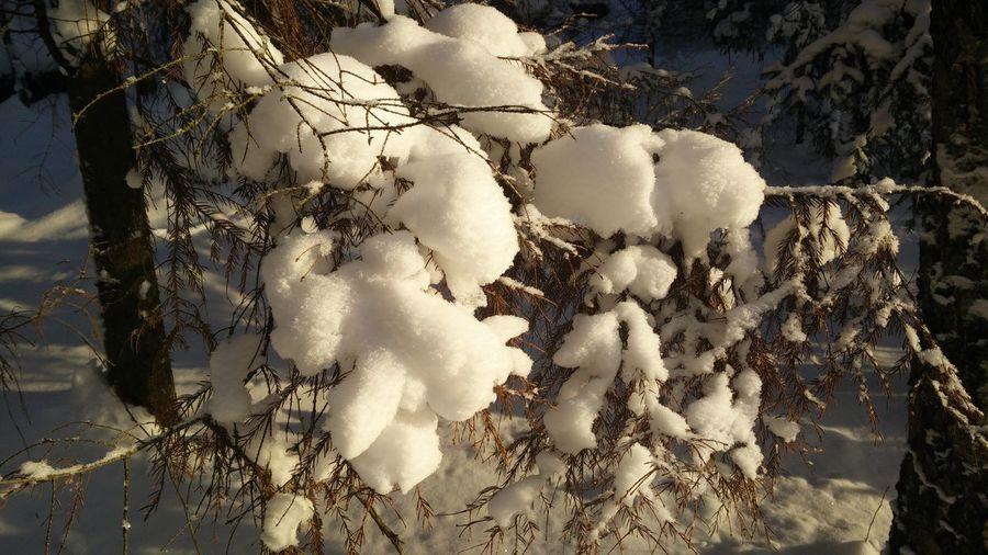 Snow ❄ Nature