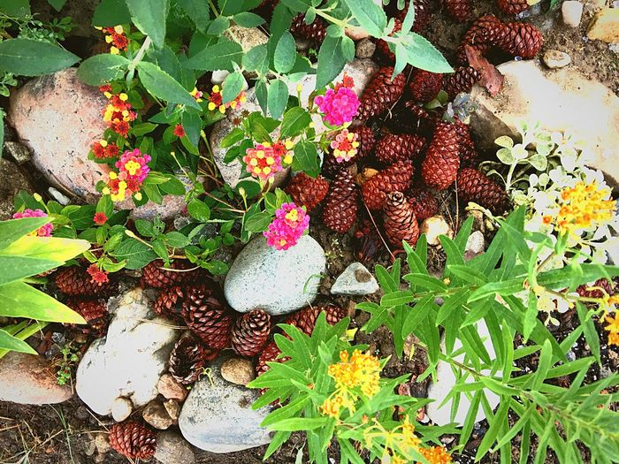 High Angle View Leaf Growth No People Outdoors Nature Day Freshness Flower Close-up Beauty In Nature Butterfly Garden Milkweed Milkweed Plant Growth Plants Plants And Flowers Plants And Garden Blooming Overhead View