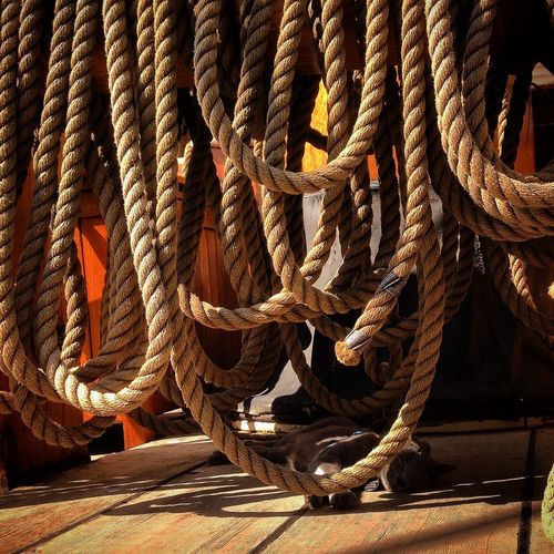Ropes hanging in boat