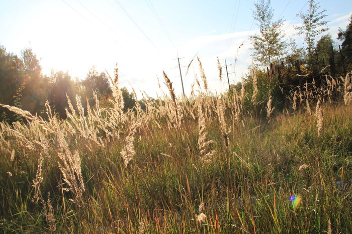 Autumn Autumn Colors Backgrounds Beauty In Nature Fall Fall Beauty Fall Colors Field Grass Growing Growth In The Grass Landscape My Sky Nature Nature No People Plant Reed - Grass Family Stalk Tall Grass Tranquility
