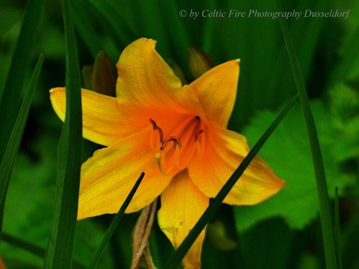 flowers 4u