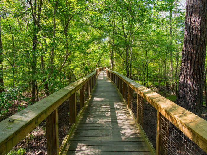 Wooden boardwalk through the lush forest of Congaree National Park Green Color Growth Hiking National Park Nature South Carolina Sunlight Adventure Beauty Beauty In Nature Boardwalk Congaree Diminishing Perspective Foliage Forest Hike No People Non-urban Scene Scenics Scenics - Nature The Way Forward Tranquil Scene Travel Destinations Walkway Wooded
