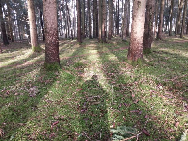 Ghost Shadow in the Woods , Shadows Shadows & Lights Ghost In The Woods Trees Aliens Epic Paranormal Sun In To The Woods Forest Outdoors Showcase:february EyeEm Selects Rethink Things The Still Life Photographer - 2018 EyeEm Awards