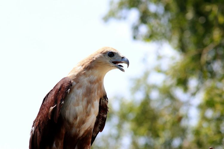 teenage eagle Tree Eagle Eagle Portrait Eagle - Bird Nature Nature_collection Nature Photography Green Tree Forest Nature Bird Of Prey Bird Tree Perching Vulture Side View Close-up Sky