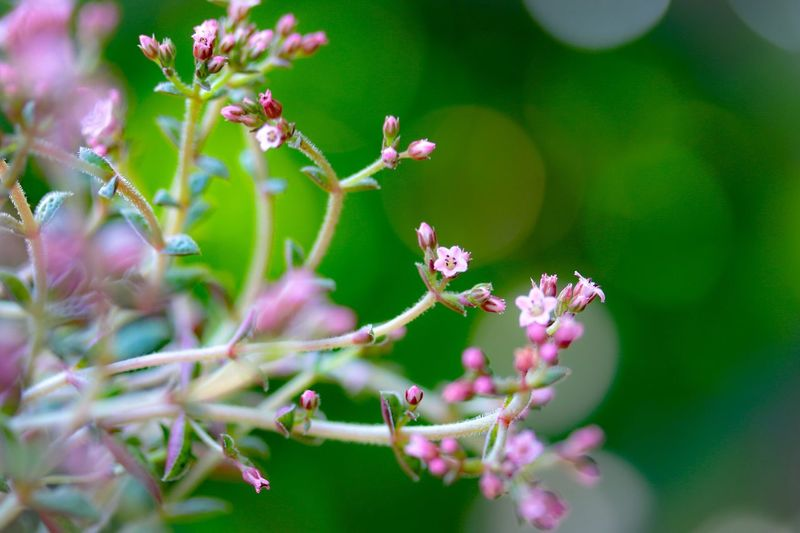 stretch out freely Macro Flower Growth Nature Beauty In Nature Selective Focus Freshness Close-up Flower Head Blooming Flowerlovers Bokeh Life Shine Small Flowers EyeEm Nature Lover