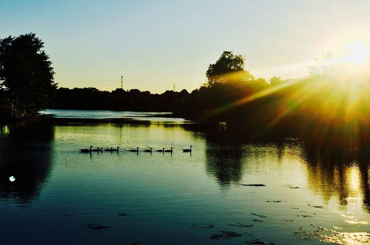 Follow the Leader Water Reflection Sunset Beauty In Nature Tranquil Scene Nature Lake Silhouette Ducks First Eyeem Photo