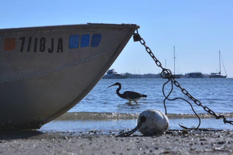 Cropped boat at shore