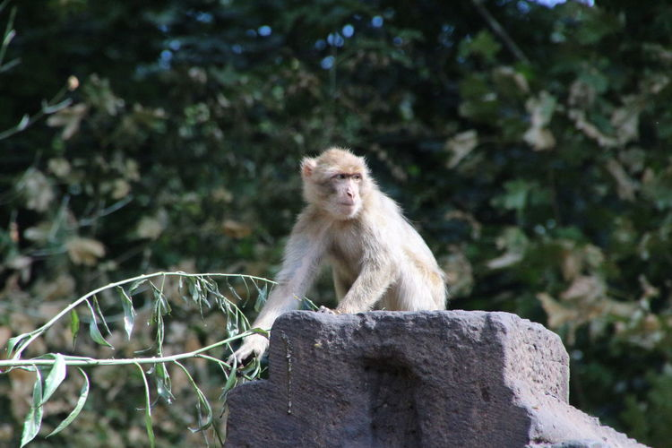 Monkey sitting on stone in forest