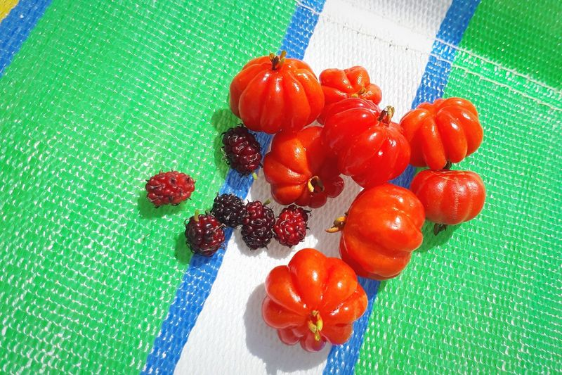 picking fruits Pitanga Blackberry Color Colors ForTheLoveOfPhotography Naturelovers EyeEm Nature Lover Summer Summertime Life Is A Beach Fruits ♡ Red Color Fruit Red High Angle View Healthy Lifestyle Ripe Close-up Food And Drink Green Color Juicy Vitamin C Antioxidant Vitamin Berry Berry Fruit Blackberry - Fruit