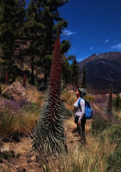 Side view of woman with backpack standing by echium wildpretii at teide national park