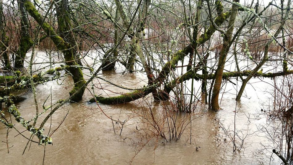 Tree Nature Water Tranquility Outdoors Flooding