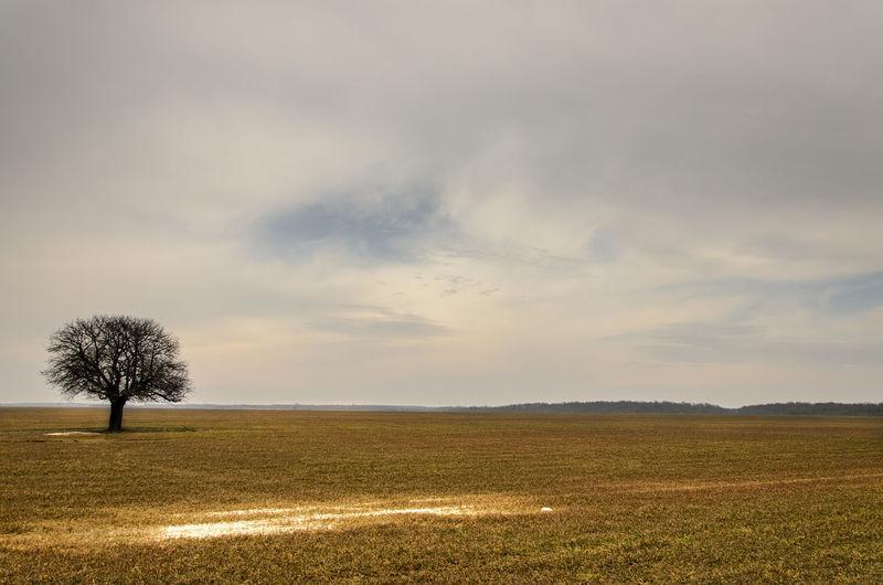 Autumn Beauty In Nature Field Field Horizon Over Land Landscape Lonely Non-urban Scene Outdoors Sky Solitude Tree
