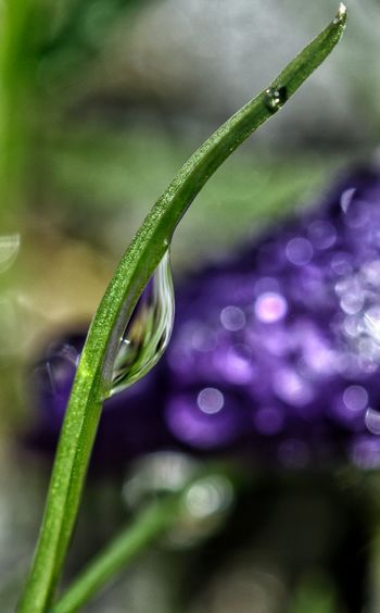Drop EyeEm Selects Nature Plant Flower Close-up Growth Fragility Freshness Petal Focus On Foreground Outdoors No People Beauty In Nature Green Color Drop Purple Water Selective Focus Social Issues Wet Day