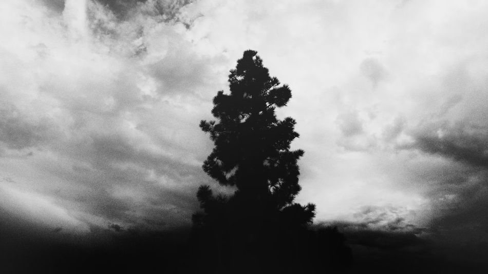 Black and white photo of a pine tree. Beauty In Nature Nature Sky No People Outdoors Day Cloud - Sky Tree Pine TreeClouds And Sky Clouds Shadowy Cloud Taking Photos Eye4photography