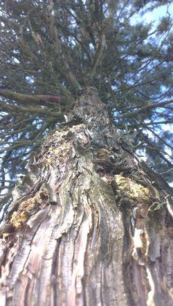 Vecchio albero... ma quante ne hai passate e viste...? the hold tree Foto_italiane Foto By Ulk Nature Tree