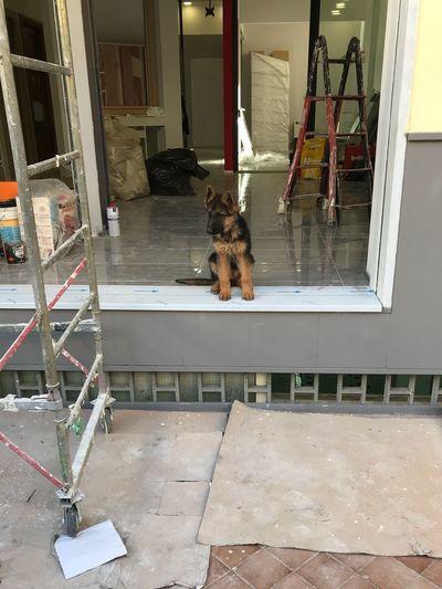 Dog At Work Love Puppy  Battipaglia
