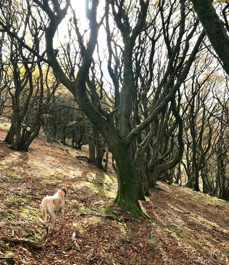 Walks In The Woods South Wales Silent Valley Lurcher Trees Spooky Trees Sunlight