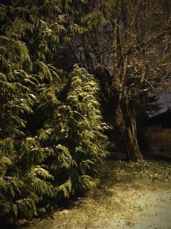 Nature No People Outdoors Tree Illuminated Treethugger Naturerox Winter Perspectives On Nature