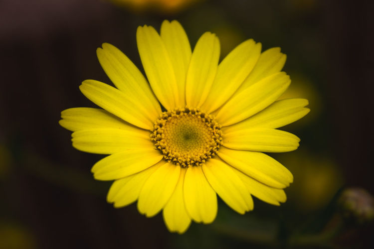Yellow Beauty In Nature Close-up Day Flower Flower Head Fragility Freshness Growth Nature No People Outdoors Petal Plant Pollen Yellow