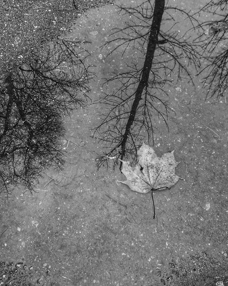 Lonely leaf. Одинокий лист листья Leaf Blackandwhite чернобелоефото