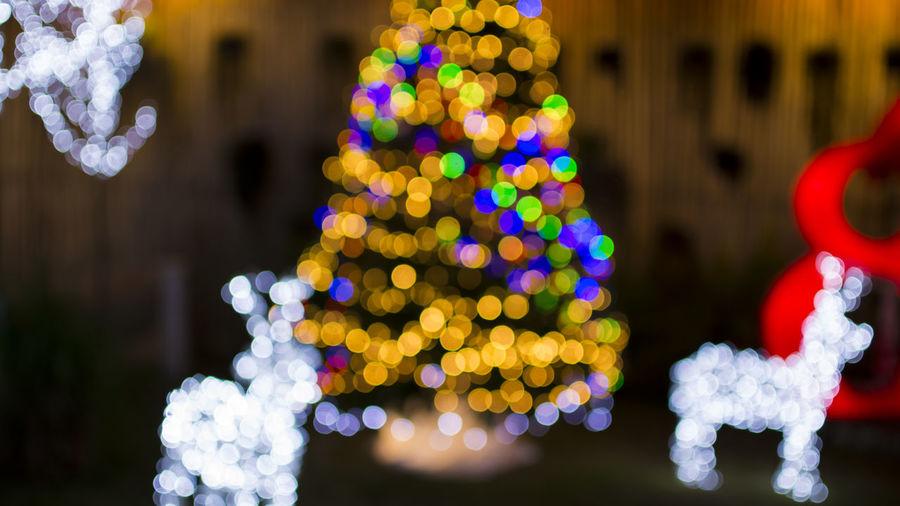 Defocused image of christmas tree