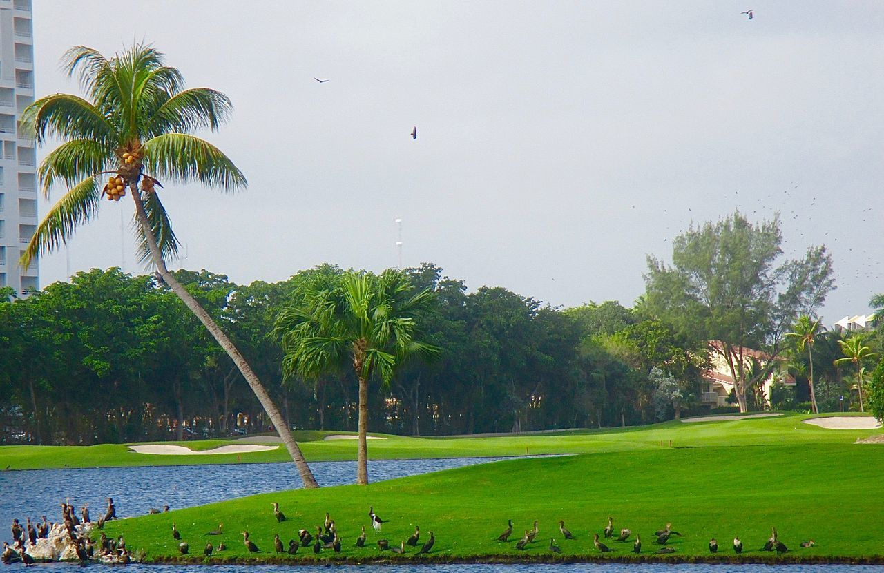 tree, green color, grass, large group of people, nature, beauty in nature, water, scenics, real people, day, tranquil scene, men, leisure activity, outdoors, lifestyles, bird, sky, palm tree, growth, large group of animals, vacations, people