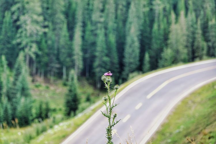 China Photos Flowerpark Road Forest Tree Nature Transportation Pinaceae Day Outdoors Landscape Summer Travel No People Vacations Winding Road Flower Beauty In Nature Rural Scene Urban Nature Valley Roadtrip XinJiang Xinjiang Of CHINAStreamzoofamily