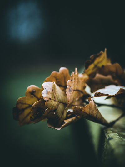 Last leaves Close-up No People Plant Focus On Foreground Selective Focus Nature Leaf Plant Part Flower Leaves Dried Autumn Fall Yellow Dry Outdoor Outdoor Photography