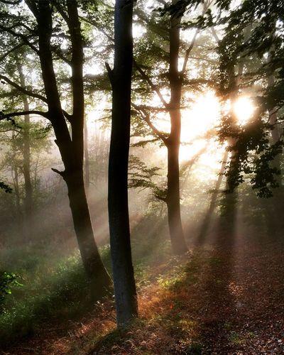 Morning mist in