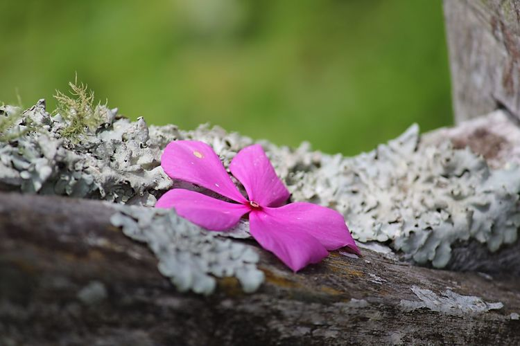 Close-up of pink flower on rock