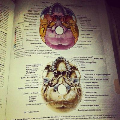 Estudiar y estudiar! .. Sacrifio continuo ..