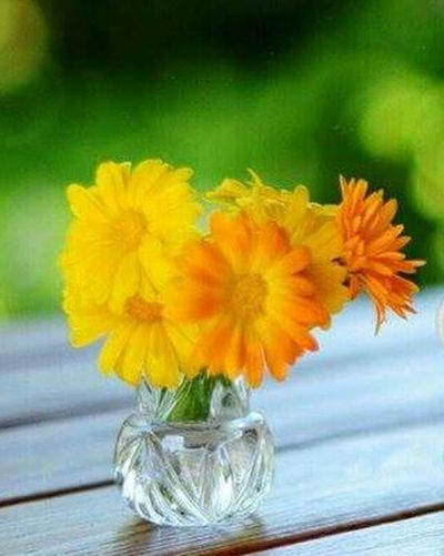 Yellow Flower Flower Photography Flower Enjoying Life Click Click 📷📷📷 Garden Beautiful Nature Peace And Quiet Yellow Sky Taking Photos Yellowmagic Green