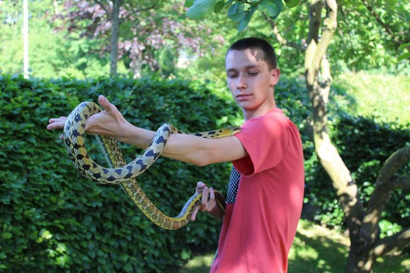 my beautiful old taiwan beauty male Snakes Beautuful Snake Reptile Awsome Beautiful Animal Reptillian Reptiles Beauty Cute Taiwan Ratsnake Ratsnakes Taiwanbeauty Adults Only One Person Adult Day People Outdoors