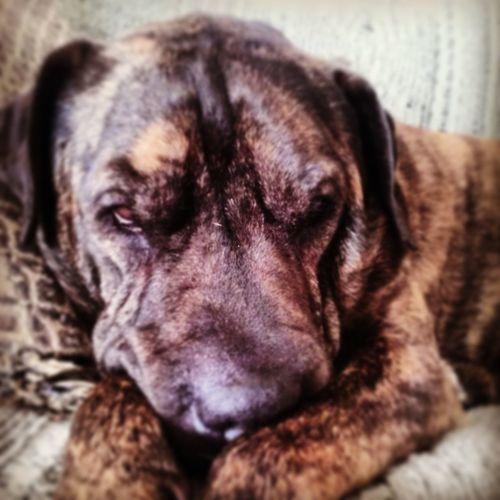 Grumpy Dog First Eyeem Photo
